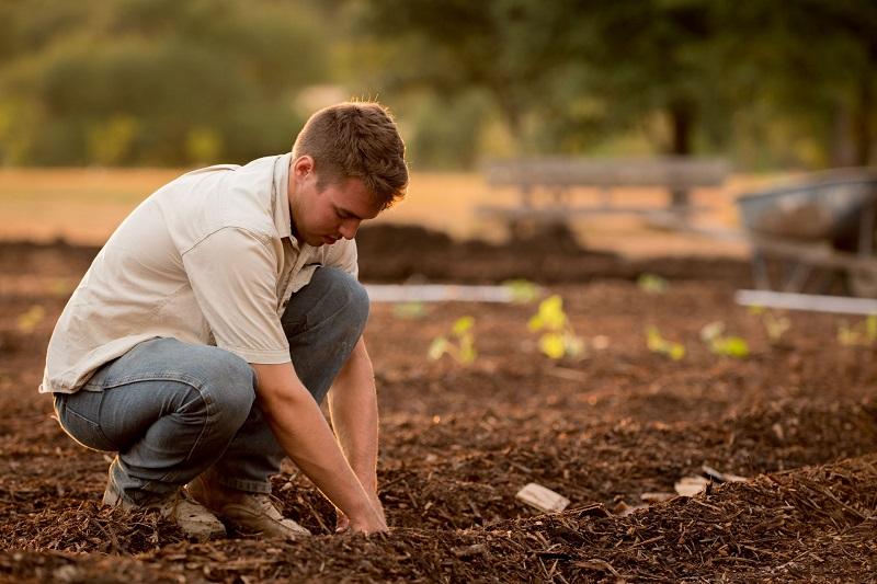 Brilliant Ways to Create an Eco-Friendly Garden