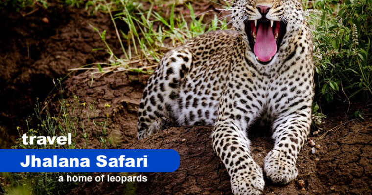 A Travel Guide For Jhalana Safari – A Home of Leopards